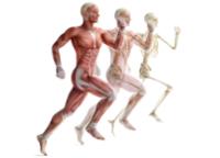 Club Activity - Anatomie & Physiologie